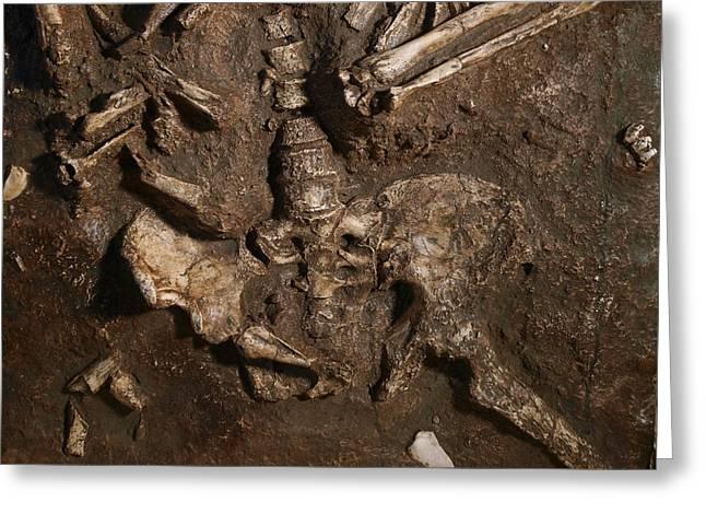 Moshe Greeting Cards - Neanderthal Skeleton, Kebara Cave, Israel Greeting Card by Javier Truebamsf