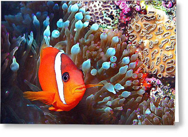 Jean Noren Greeting Cards - Nemo Greeting Card by Jean Noren