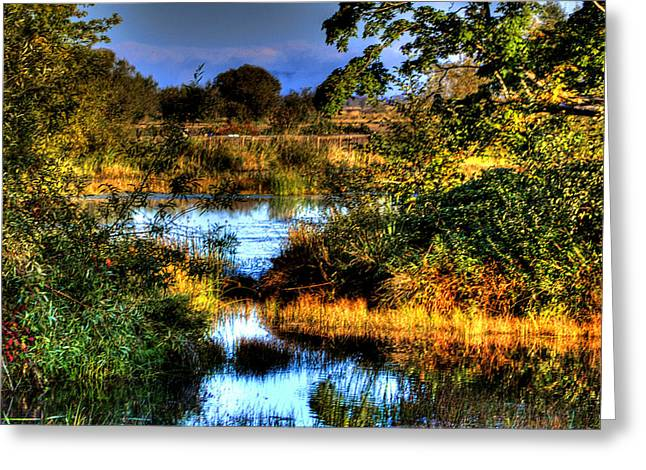 Hdr Landscape Greeting Cards - Nisqually Ponds Greeting Card by David Patterson