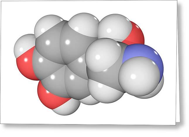 Noradrenaline Greeting Cards - Norepinephrine Neurotransmitter Molecule Greeting Card by Laguna Design