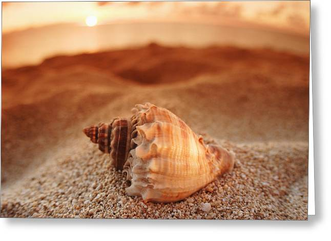 Vince Greeting Cards - North Shore Seashell Greeting Card by Vince Cavataio - Printscapes