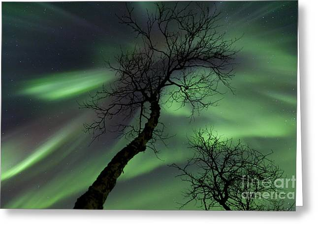 Nordland County Greeting Cards - Northern Lights In The Arctic Greeting Card by Arild Heitmann
