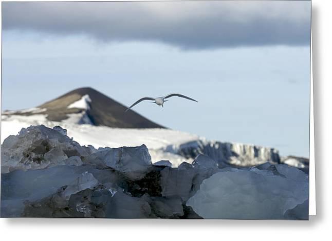 Svalbard Greeting Cards - Norway, Svalbard Islands, Spitsbergen Greeting Card by Keenpress