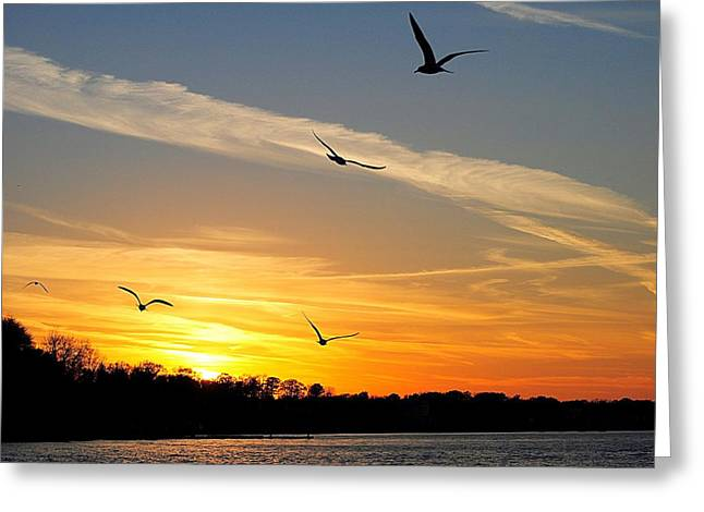 Willow Lake Greeting Cards - November Sunset Greeting Card by Frozen in Time Fine Art Photography