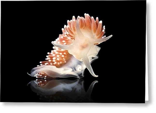 Opisthobranch Greeting Cards - Nudibranch Greeting Card by Alexander Semenov