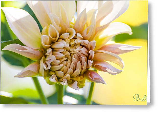 Floral Artist Greeting Cards - Oh Sunny Day Greeting Card by Christine Belt