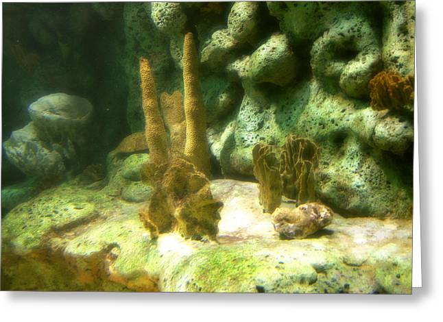 Sea Plants Greeting Cards - Oklahoma Aquarium  Greeting Card by Toni Hopper