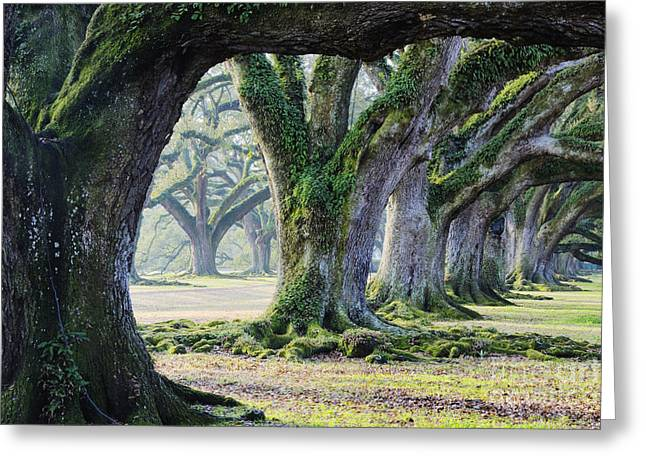 Overhang Greeting Cards - Old Growth Trees Greeting Card by Jeremy Woodhouse