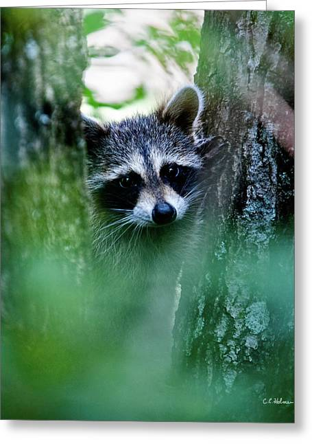 Christopher Holmes Greeting Cards - On Watch Greeting Card by Christopher Holmes