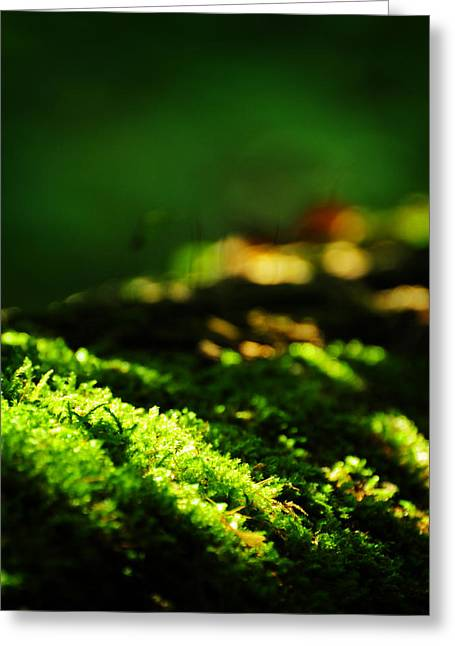 Dappled Light Photographs Greeting Cards - One Hundred Ways Greeting Card by Rebecca Sherman