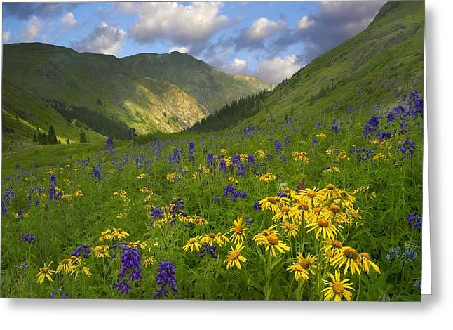 Larkspur Greeting Cards - Orange Sneezeweed And Delphinium Greeting Card by Tim Fitzharris