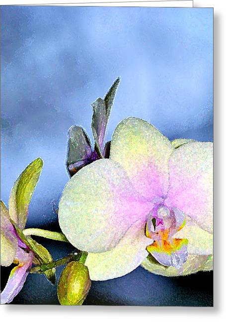 Orchid 1 Greeting Card by Pamela Cooper