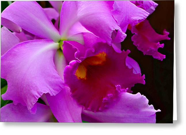 Cattleya Greeting Cards - Orchid 5 Greeting Card by Julie Palencia