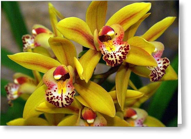 Marty Koch Greeting Cards - Orchid 9 Greeting Card by Marty Koch