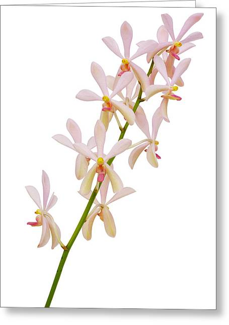 Pink Flower Branch Greeting Cards - Orchid Panicle Greeting Card by Atiketta Sangasaeng