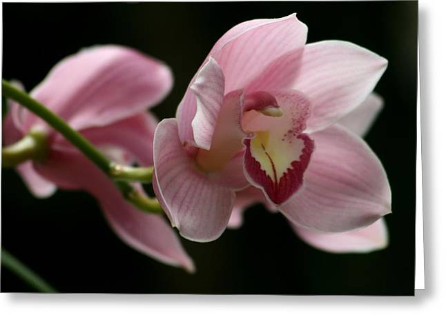 Nature Pyrography Greeting Cards - Orchids  Mystery Greeting Card by Valia Bradshaw