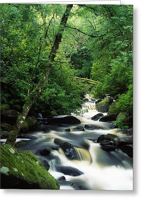 Isi Greeting Cards - Owengarriff River, Killarney National Greeting Card by Richard Cummins