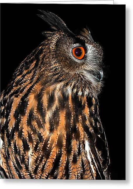 Strigidae Greeting Cards - Side Portrait of an Eagle Owl Greeting Card by Jean Noren