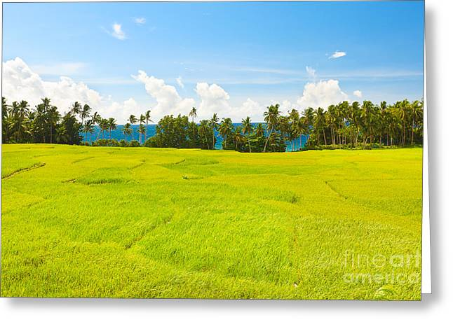 Beautiful Scenery Greeting Cards - Paddy rice  Greeting Card by MotHaiBaPhoto Prints