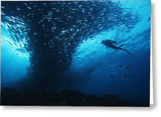 Snorkeling Photos Greeting Cards - Palau, Diving Greeting Card by Dave Fleetham - Printscapes