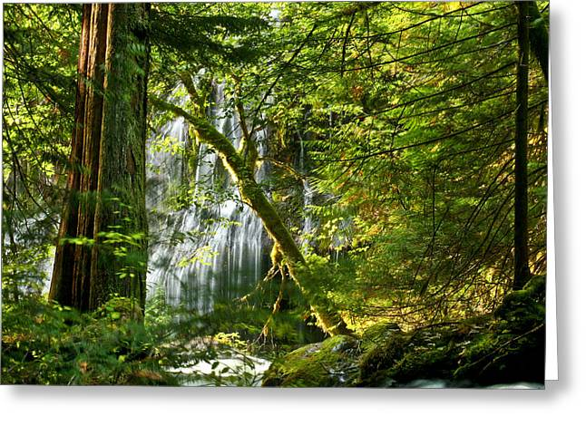 Fir Trees Greeting Cards - Panther Creek Greeting Card by Jean Noren