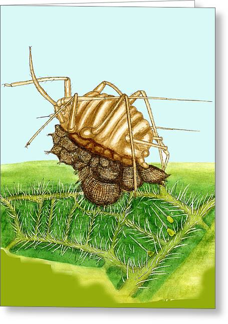 Cocoon Greeting Cards - Parasitised Aphid Greeting Card by Dr Keith Wheeler