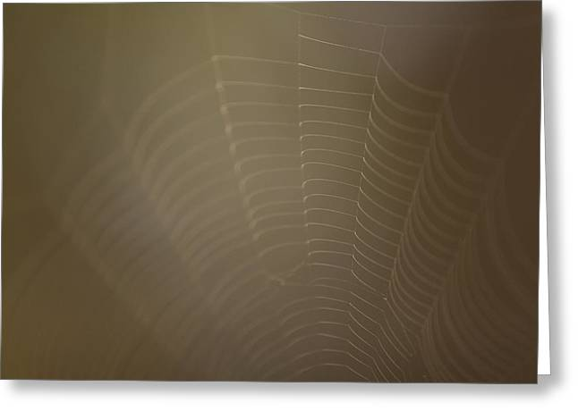 Brown Tones Greeting Cards - Part Of A Spider Web Shows Greeting Card by Phil Schermeister