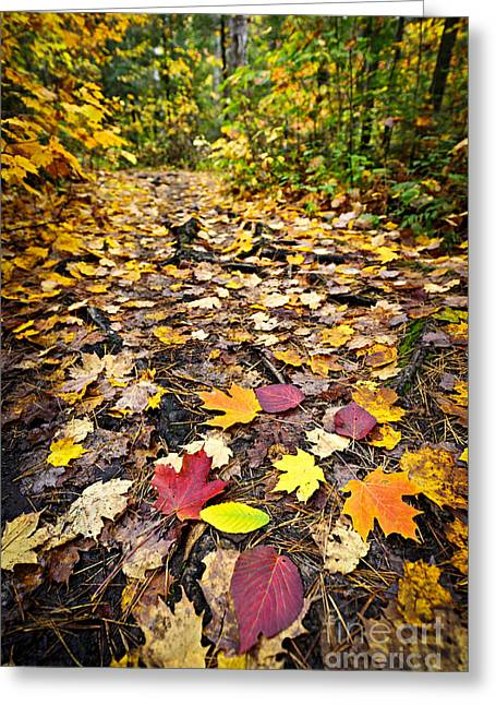 Autumn Greeting Cards - Path in fall forest Greeting Card by Elena Elisseeva