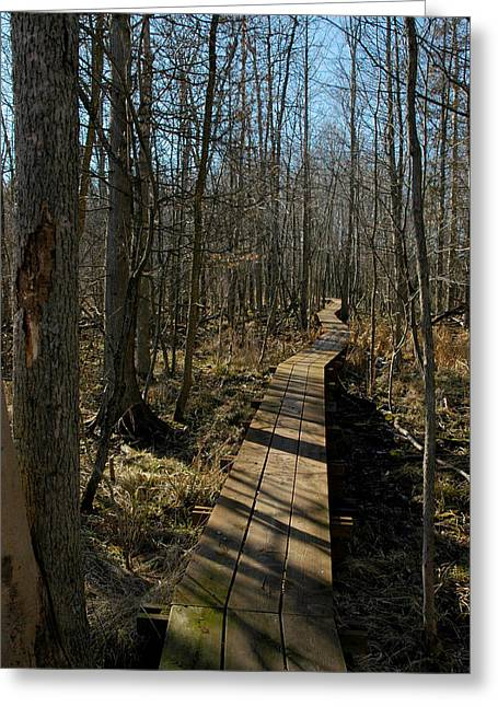 Nature Center Pond Greeting Cards - Path Into The Woods Greeting Card by LeeAnn McLaneGoetz McLaneGoetzStudioLLCcom