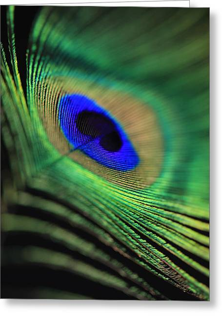 Fed Greeting Cards - Peacock feather Greeting Card by Falko Follert