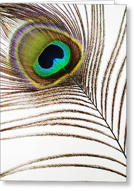 Abstract Expression Photographs Greeting Cards - Peacock Feathers Greeting Card by Mary Van de Ven - Printscapes