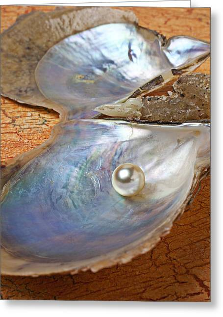 Mollusk Greeting Cards - Pearl in oyster shell Greeting Card by Garry Gay