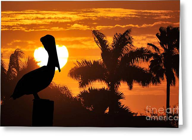 Pelican At Sunset Greeting Card by Dan Friend
