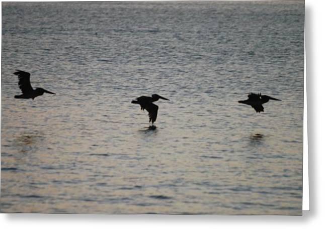 Pelicans Over Ocean Greeting Cards - Pelicans in Flight Greeting Card by Michael Vanatta
