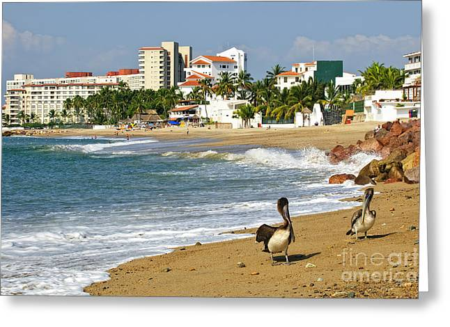 Pelicans Greeting Cards - Pelicans on beach in Mexico Greeting Card by Elena Elisseeva