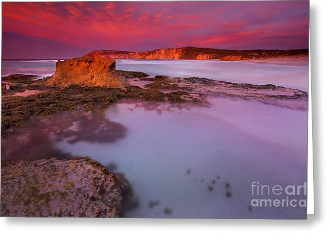 Kangaroo Island Greeting Cards - Pennington Dawn Greeting Card by Mike  Dawson