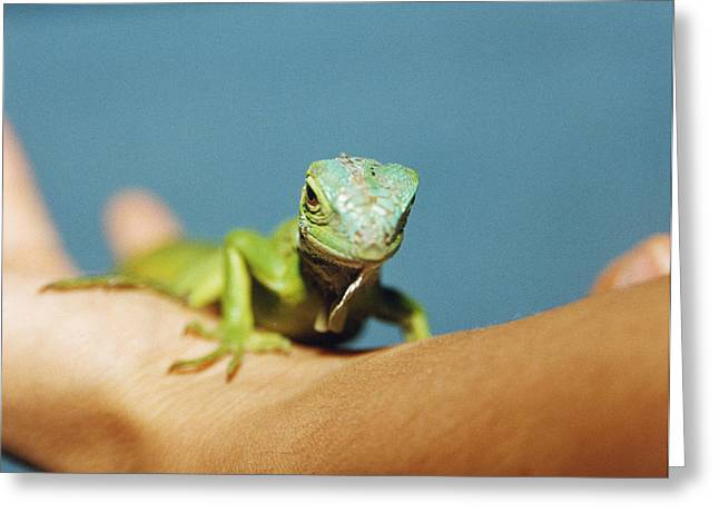 Owner Greeting Cards - Pet Iguana Greeting Card by Cristina Pedrazzini