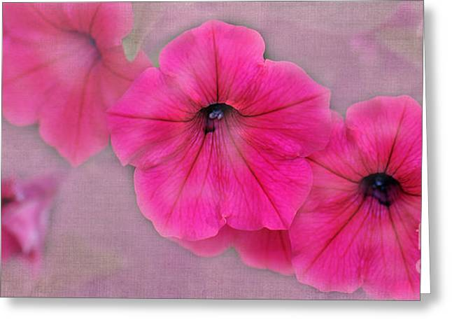 Floral Photographs Digital Greeting Cards - Petunias Greeting Card by Betty LaRue