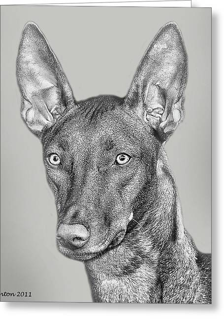 Pharaoh Digital Art Greeting Cards - Pharaoh Hound Greeting Card by Larry Linton