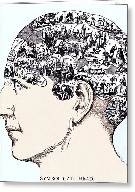 Historical Pictures Greeting Cards - Phrenology Chart Greeting Card by Sheila Terry