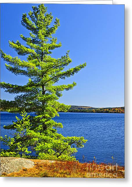 Two Rivers Greeting Cards - Pine tree at lake shore Greeting Card by Elena Elisseeva