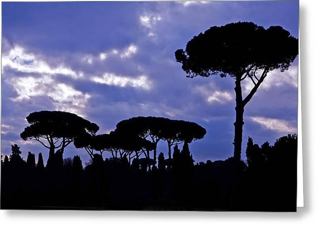 Umbrella Pine Greeting Cards - Pine Trees Greeting Card by Joana Kruse