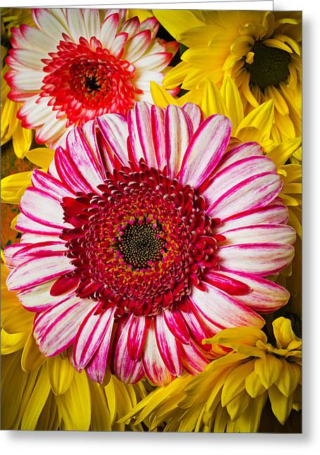 Pink Blossoms Greeting Cards - Pink and yellow mums Greeting Card by Garry Gay