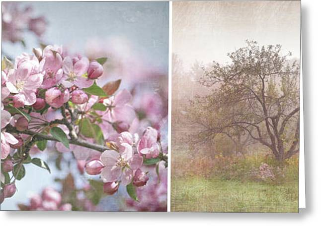 Blooms Greeting Cards - Pink apple blossoms Greeting Card by Sandra Cunningham