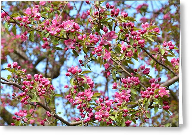 Nature Abstract Greeting Cards - Pink Blossoms Greeting Card by Kathleen Struckle