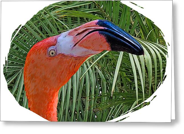 Pink Flamingo Nature Photo Greeting Cards - Pink Flamingo Greeting Card by Larry Linton