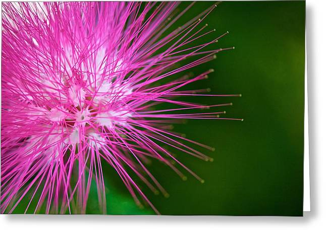 Naples Greeting Cards - Pink Flower Greeting Card by Jack Scicluna
