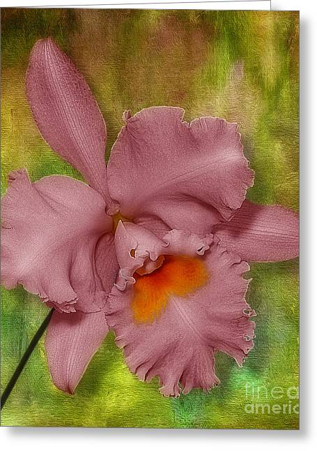 Botany Greeting Cards - Pink Orchid Greeting Card by Susan Candelario