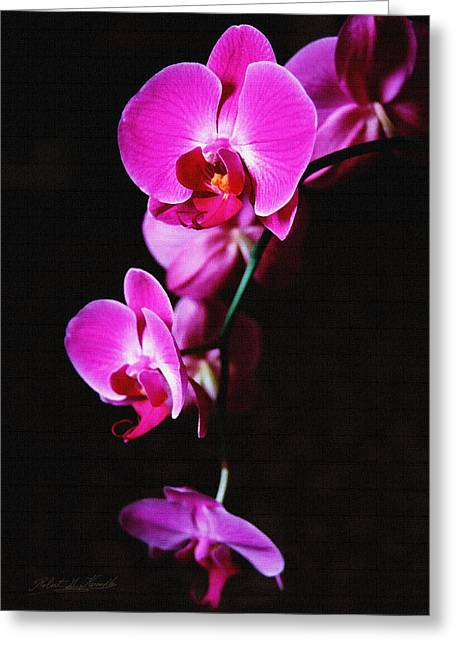 Best Flower Images Greeting Cards - Pink Orchid Trio Greeting Card by Robert Kernodle