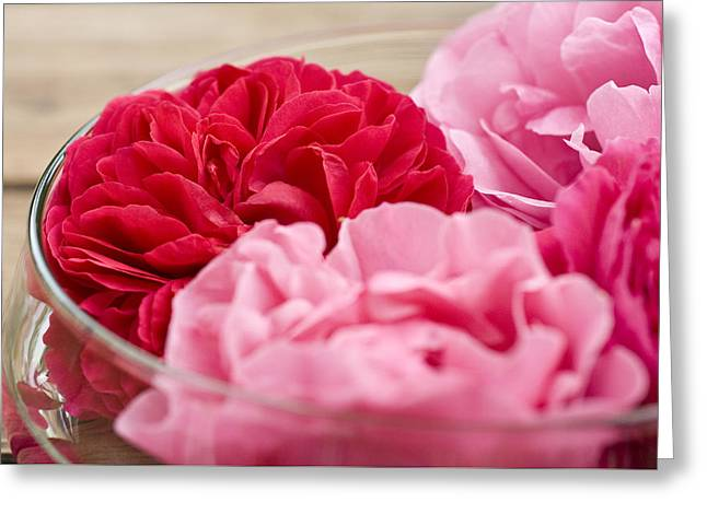 Pinkish Greeting Cards - Pink Roses Greeting Card by Frank Tschakert